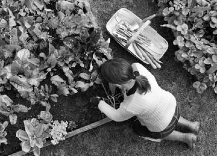 An image of a person gardening. She has a wheelbarrow and gardening tools.